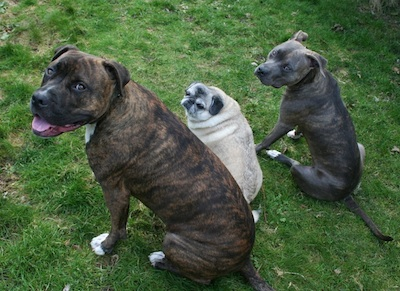 Port Moody Dog Training