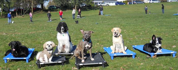 Dog training Burnaby