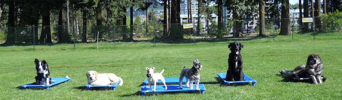Dog Trainer Vancouver