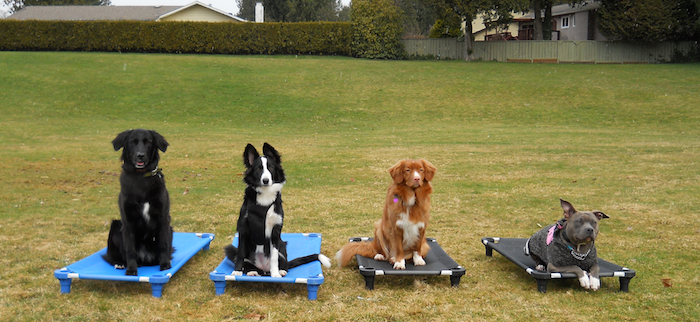 Pitt Meadows Dog Training