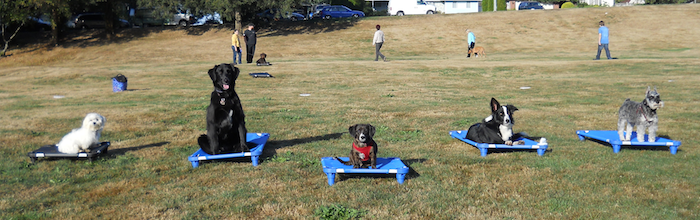 Burnaby Dog Training