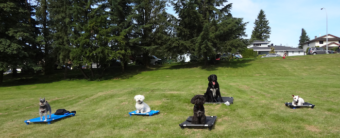 Burnaby Puppy Training