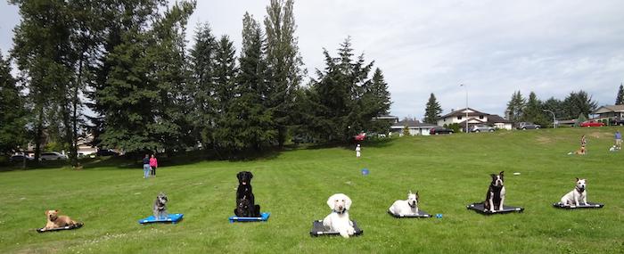 Burnaby Dog Training