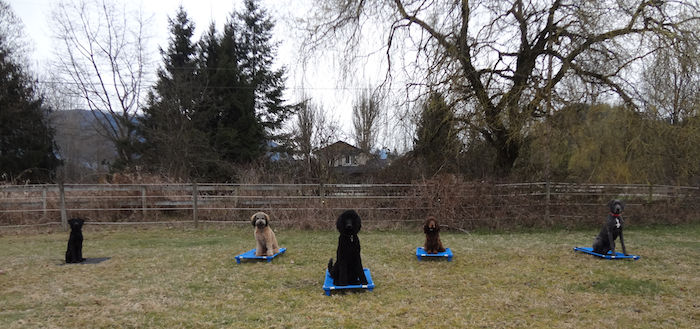 Burnaby Dog Training, Dog Trainer