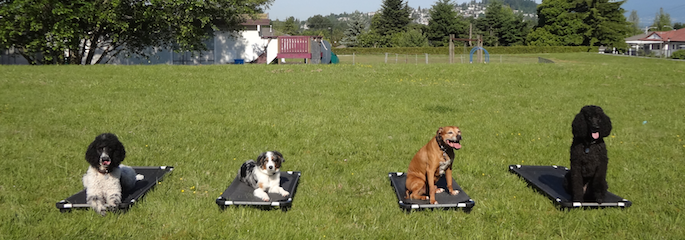 Port Moody Dog Training