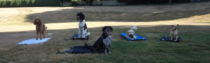 Pitt Meadows Dog Training