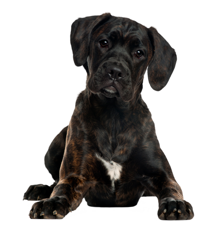 Vancouver Dog Training - Sit Happens Dog Training