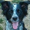 Cloe - Sit Happens Dog Training - Featured Puppy