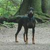 Damien - Sit Happens Dog Training - Featured Puppy