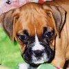 Emma - Sit Happens Dog Training - Featured Puppy