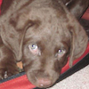 Hunter - Sit Happens Dog Training - Featured Puppy