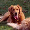 Kasey - Sit Happens Dog Training - Featured Puppy