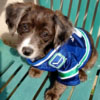 Lucy - Sit Happens Dog Training - Featured Puppy