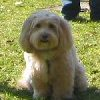 Poe - Sit Happens Dog Training - Featured Puppy