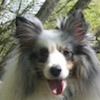 Roman - Sit Happens Dog Training - Featured Puppy