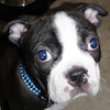 Rosco - Sit Happens Dog Training - Featured Puppy