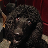 Sit Happens Dog Training -