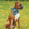 Sidney - Sit Happens Dog Training - Featured Puppy
