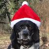 Sugar - Sit Happens Dog Training - Featured Puppy