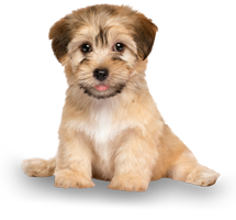 Puppy Training - Sit Happens Dog Training - Coquitlam - Burnaby - Vancouver - Maple Ridge